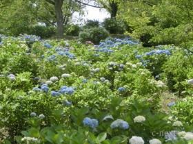 [写真]斜面に咲く花々