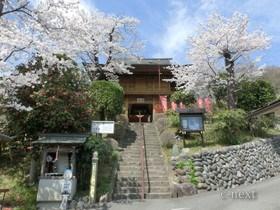 [写真]桜の季節