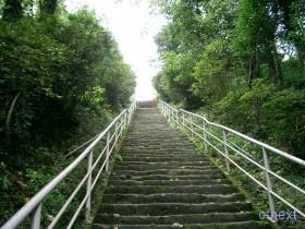 [写真]法泉寺の石段