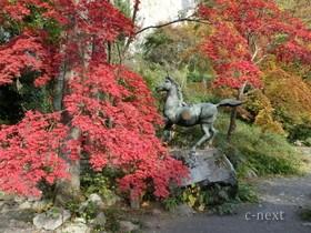 [写真]紅葉の季節