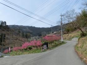 [写真]花桃の郷エリアの入口の分岐
