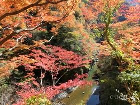 [写真]三峰渓谷の紅葉
