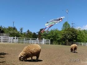 [写真]芝桜の季節のふれあい牧場