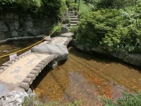[写真]金魚が泳ぐ池