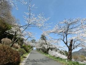 [写真]丘への坂道
