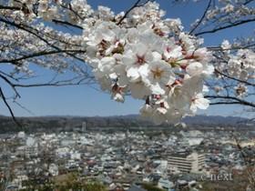 [写真]桜と市街地