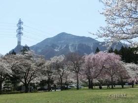 [写真]桜と武甲山