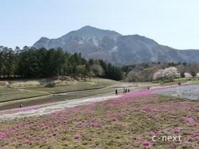 [写真]桜の季節の芝桜の丘