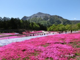 [写真]羊山公園「芝桜の丘」