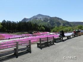 [写真]芝桜の丘のベンチ