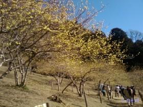 [写真]ロウバイ園の遊歩道