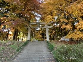 [写真]秋の宝登山