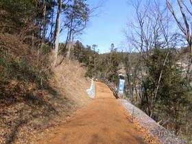 [写真]林の中の遊歩道