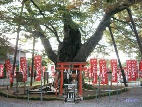 [写真]今宮神社