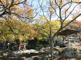 [写真]岩畳の紅葉
