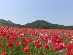 [写真]花畑