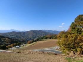 [写真]秋のポピー畑