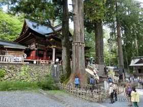 [写真]拝殿と御神木