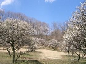 [写真]春の梅園