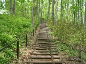 [写真]林間の遊歩道