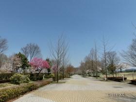 [写真]春のスカイロード