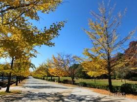 [写真]芝生広場前の黄葉風景
