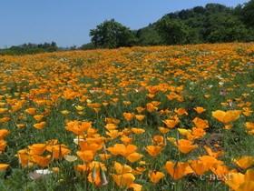 [写真]オレンジ色に染まる園内