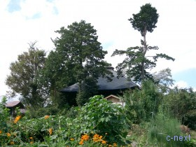 [写真]けやき公園から見た秩父札所17番定林寺