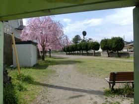 [写真]通路から見た風景(桜の季節)