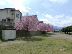 [写真]けやき公園の物置前(桜の季節)
