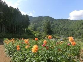 [写真]園内の風景