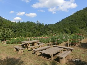 [写真]木のベンチ