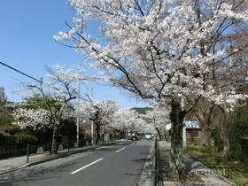 [写真]北桜通り