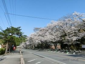 [写真]宝登山神社近くの参道