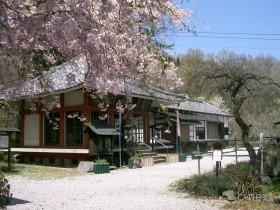 [写真]桜と不動寺本堂