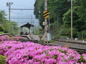 [写真]ツツジの花とホーム