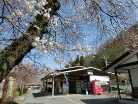 [写真]桜と駅舎