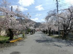 [写真]駅前の桜並木