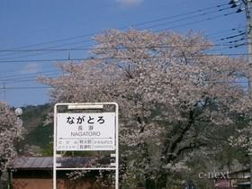 [写真]桜と駅名板