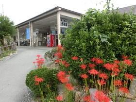[写真]彼岸花の季節