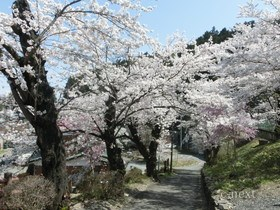 [写真]桜の季節の駅坂道