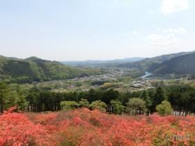 [写真]寄居町・金尾山のつつじ