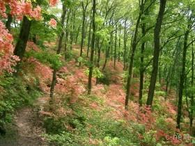 [写真]ツツジ園地の山道