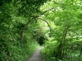 [写真]林の中の道