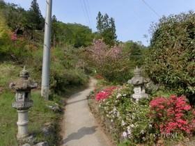 [写真]つつじの咲く参道